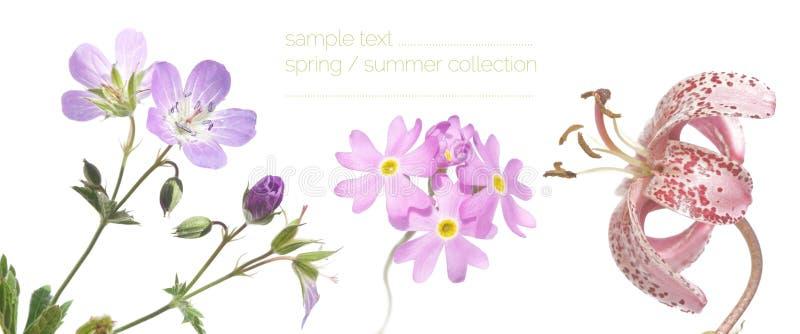 Download Spring flora up close stock image. Image of gardening - 23336131