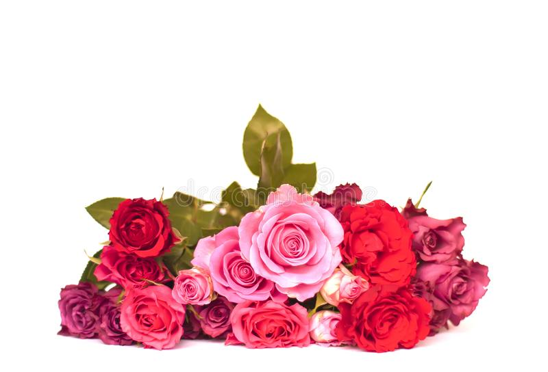Spring floral background. Bunch of beautiful pink and red rose flowers. royalty free stock photos