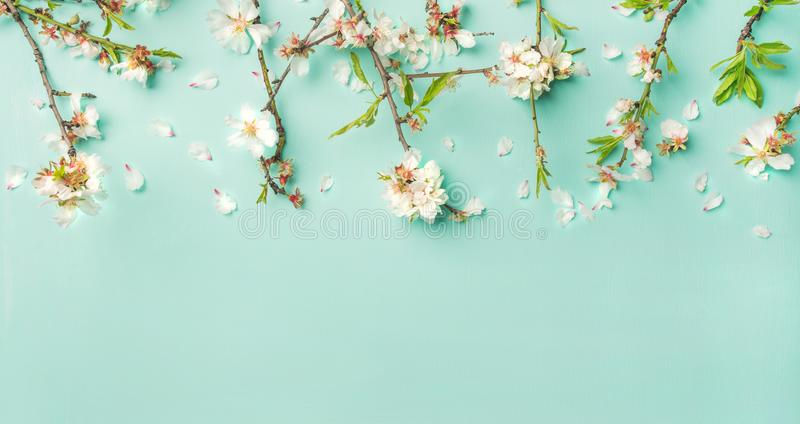 Spring almond blossom flowers over light blue background, wide composition stock photos