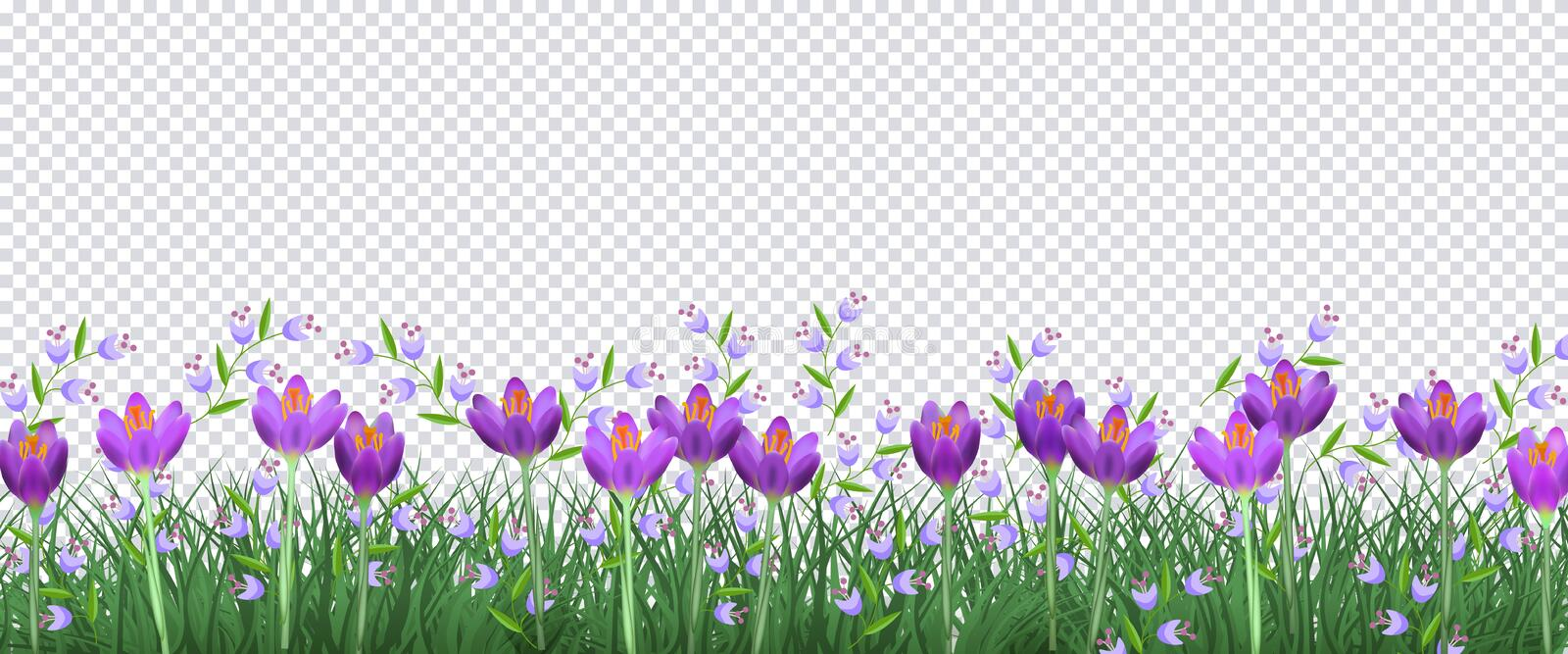 Spring floral border with bright purple crocuses and little blue wild flowers on green grass on transparent background. royalty free illustration