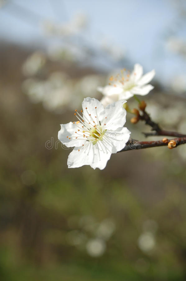 Spring flower stock images