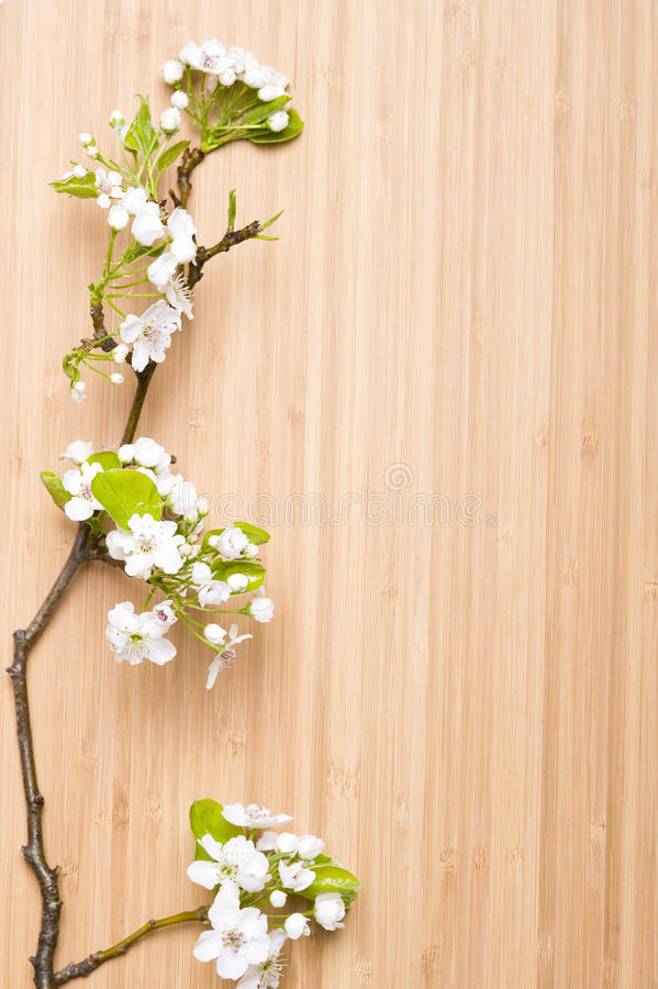 Free Spring Flower Stock Images - 13807644