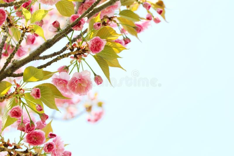 Spring flower stock photos