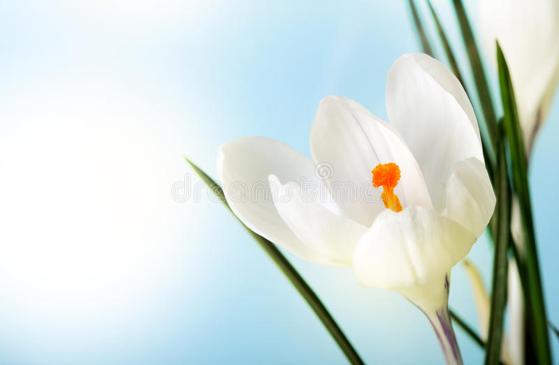 Download Spring flower stock photo. Image of blossom, spring, branch - 20398852