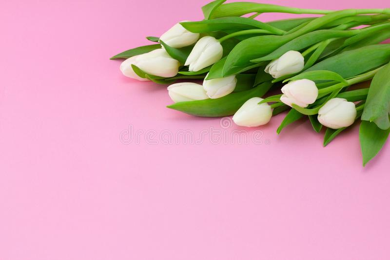 Spring flower arrangement with white tulips on a pink background, copy space stock photography