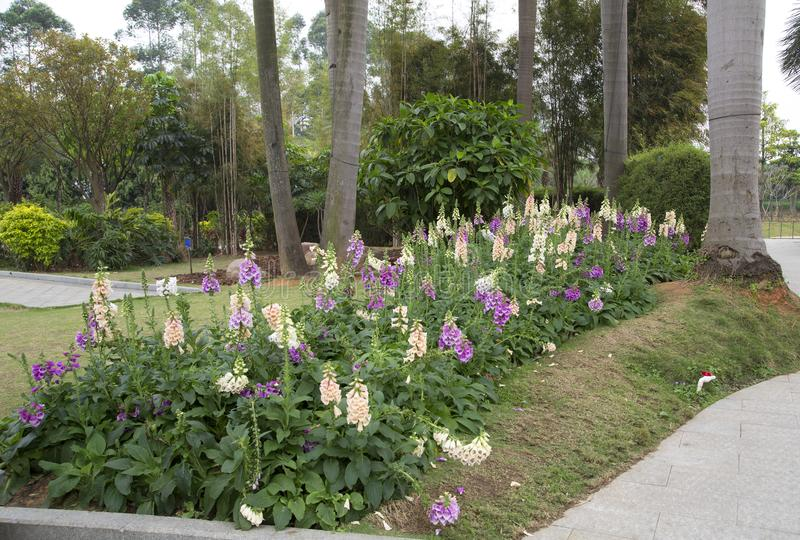 Spring flower bed around trees design in the flower park. Spring flower bed around plants design in the flower park , city Nanning China stock images