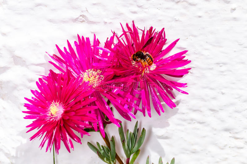 Spring flower and bee flying to foraging stock images