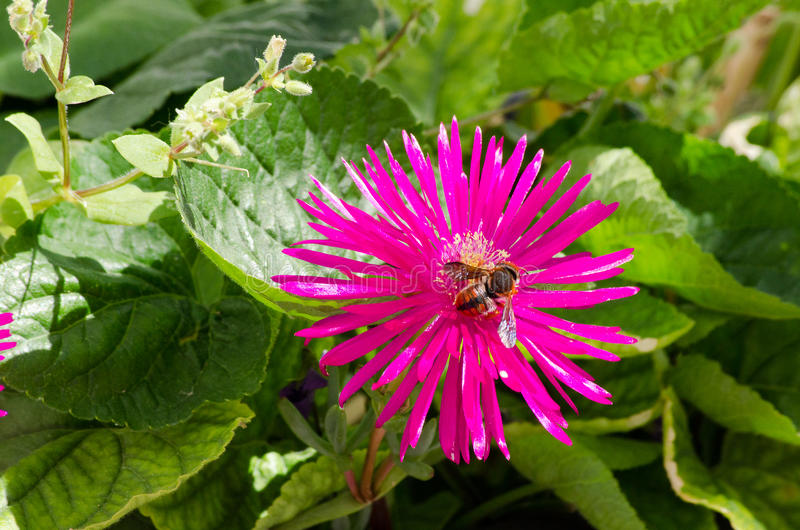Spring flower and bee foraging stock photos