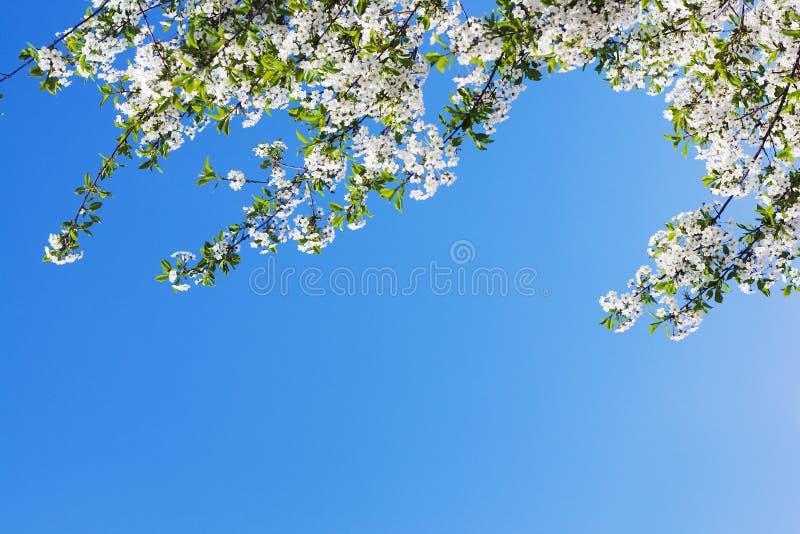 Spring flower blossom. stock photos