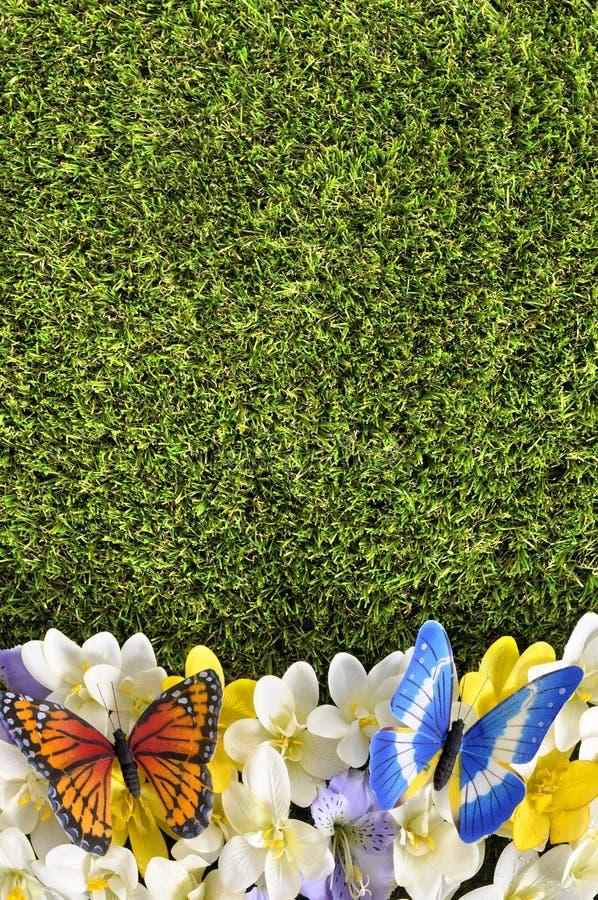 Spring flower border background, butterflies, grass copy space, vertical. Spring flower border background with butterflies, grass copy space stock image