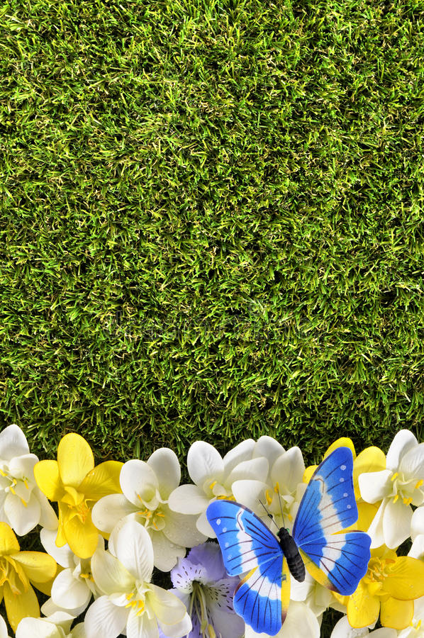 Spring flower border background with butterfly, grass copy space. Spring flower border background with butterfly, copy space royalty free stock image