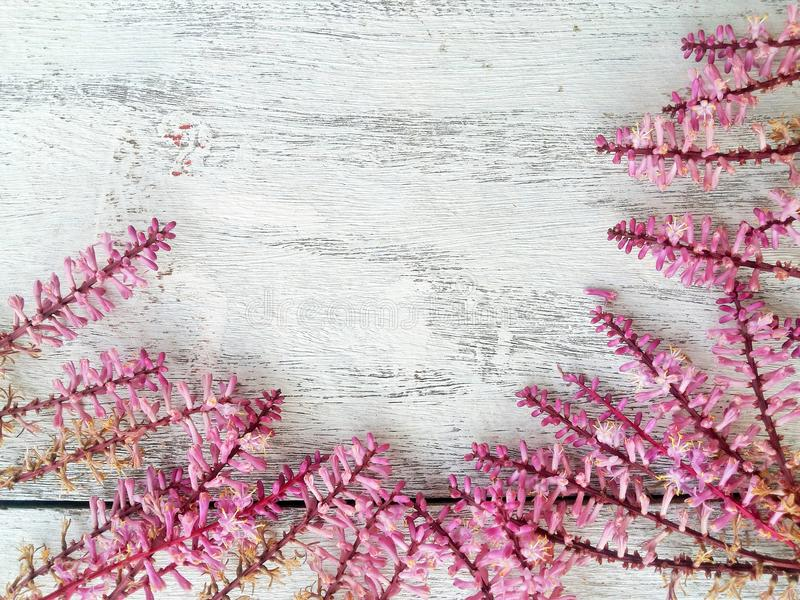 Spring flower border and frame on wood background. Colorful pink spring flower border on wooden background stock photo