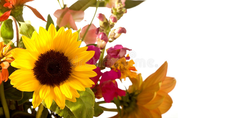 Spring Flower Bouquet Border. Spring Flower Bouqet Border focussing on sunflower stock photography