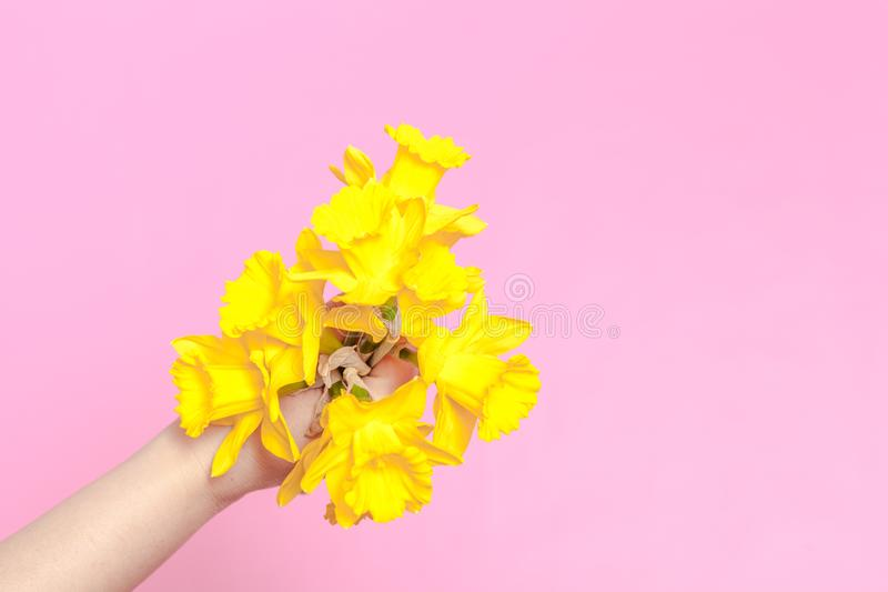 Spring flower, a bouquet yellow daffodils in a woman hand royalty free stock image