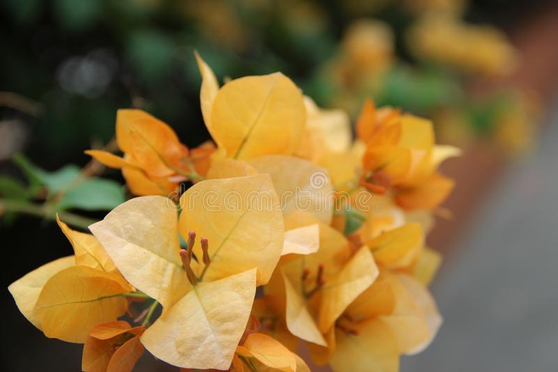 Spring flower colors royalty free stock photo