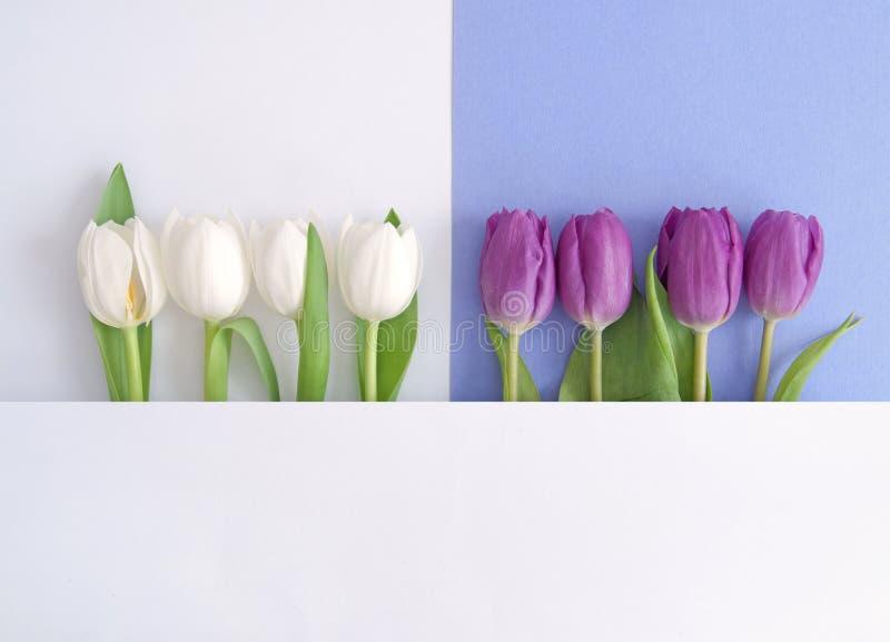 Spring flower design vector illustration