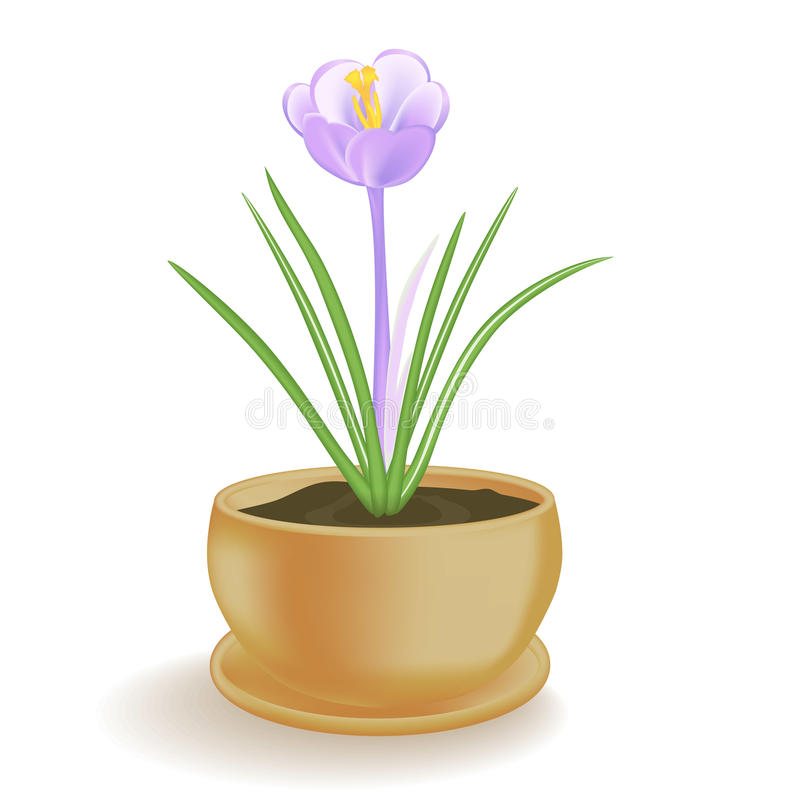 Spring flower in a flowerpot on white background. Vector illustration EPS10 royalty free illustration