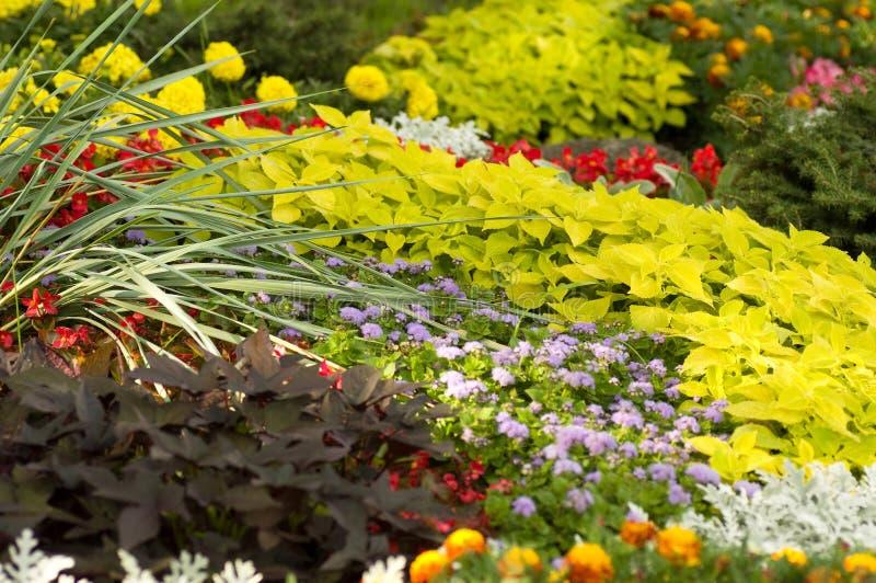 Spring flower garden background royalty free stock photos
