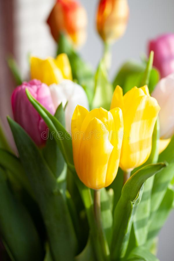 Spring flower pink orange and yellow tulips bouquet on window. Spring flower pink orange and yellow tulips bouquet, white, green, beautiful, beauty, floral stock photography