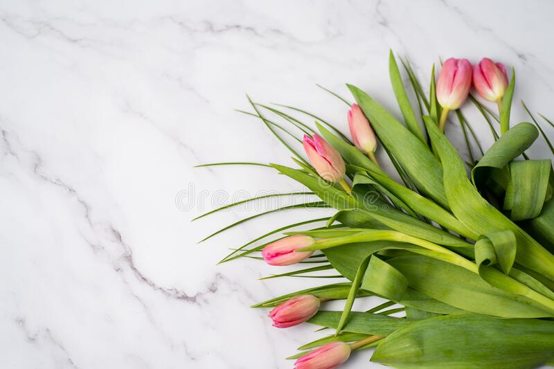 Spring flower pink tulips stock photography