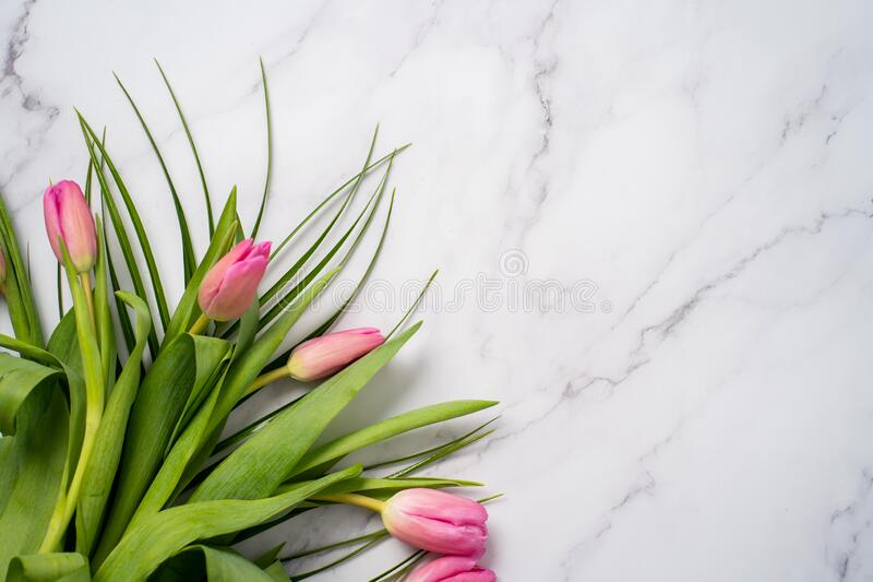 Spring flower pink tulips stock images