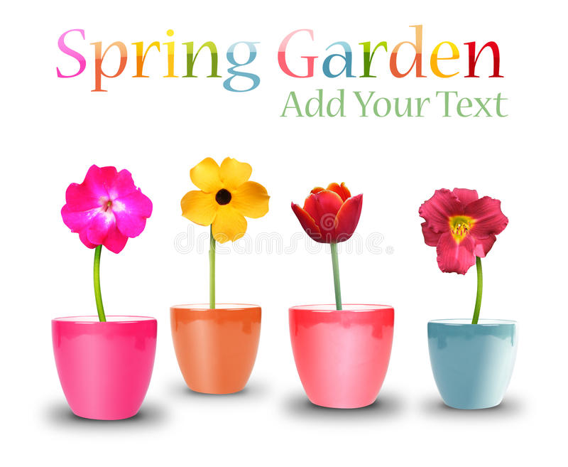 Download Spring Flower Pots On White Stock Photo - Image: 24542670