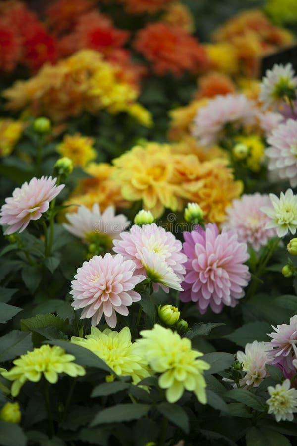 Spring of flower in uk stock image