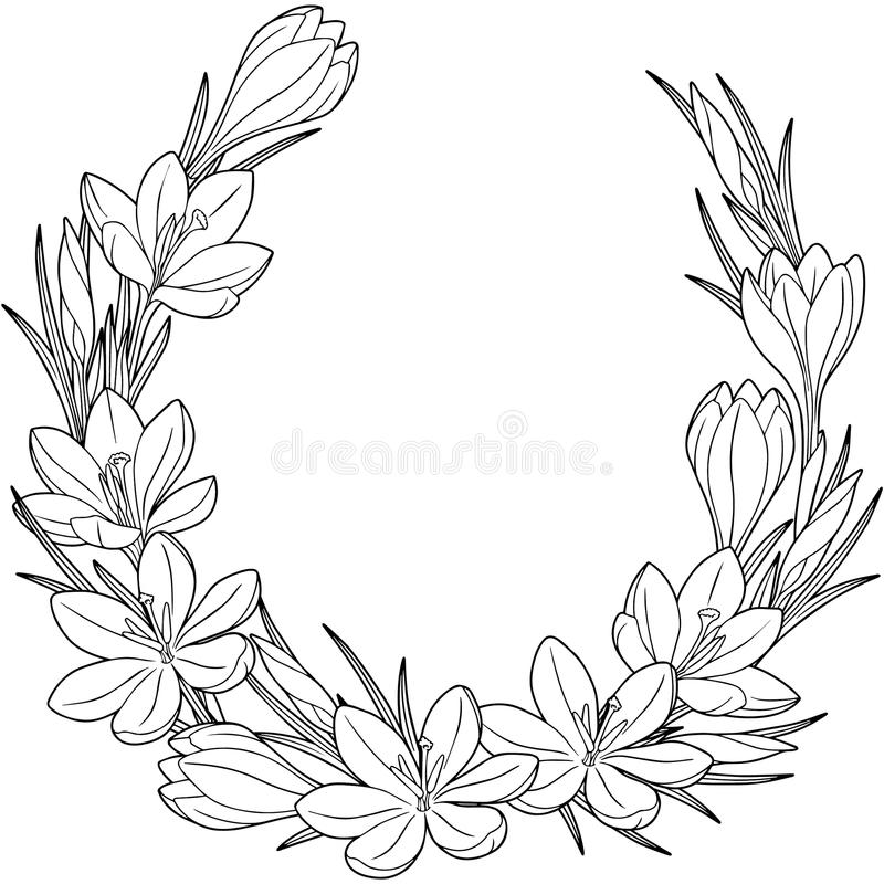 Spring flower vignett of crocuses. Vector elements isolated. Black and white image for adult relaxation. Image for design of cards stock illustration