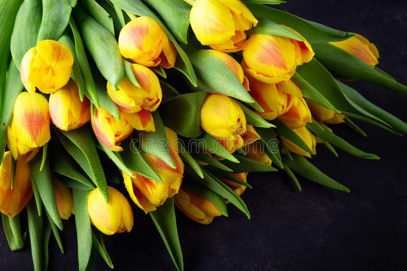 Spring flower yellow red tulips bouquet royalty free stock images