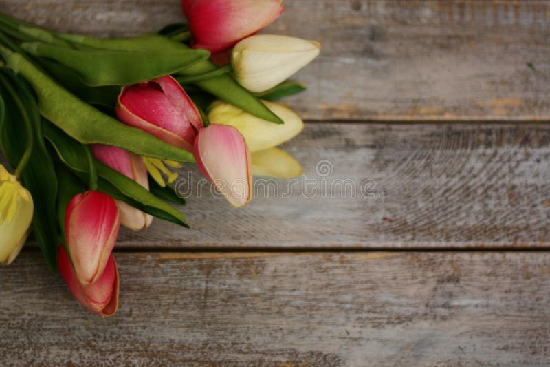 Spring flowering branch on wooden background. Multi-colored tulips stock images