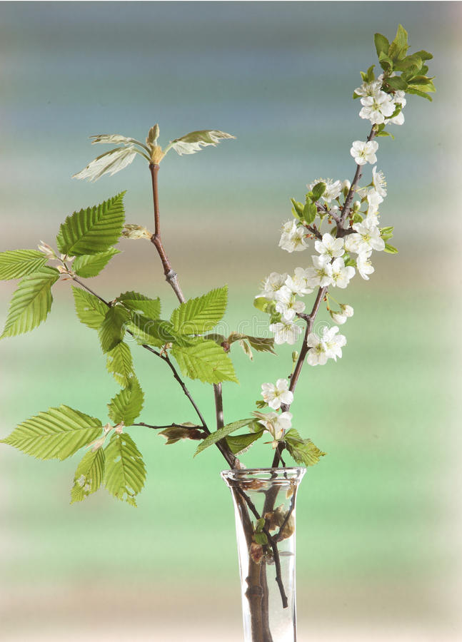 Download Spring flowering branches stock photo. Image of green - 13937578