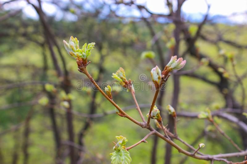 Spring lives royalty free stock photography