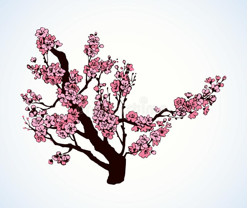 Spring flowering tree. Vector drawing. Lush pink inflorescence on old sprout in flowery orchard yard. Freehand outline ink hand drawn picture sketchy in artistic stock illustration