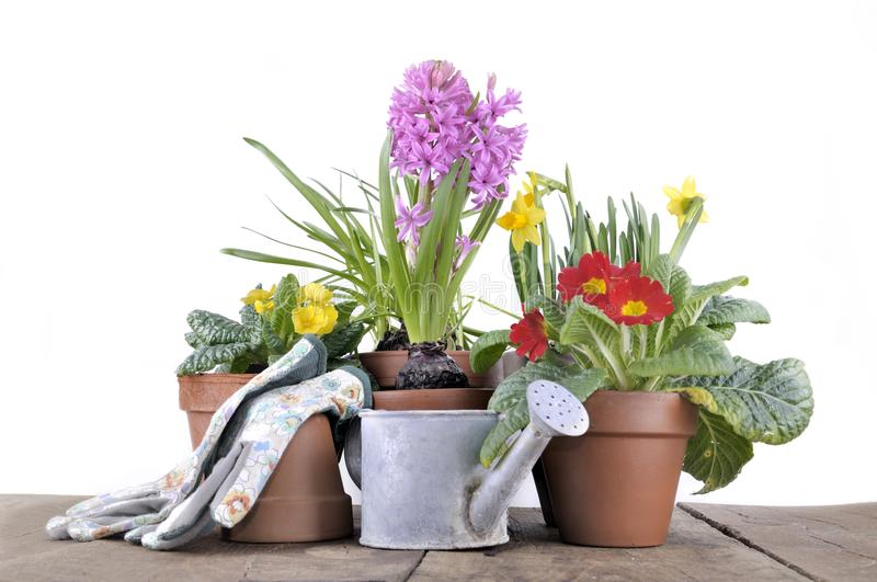 Spring potted flower on a table stock photo image of table spring download spring potted flower on a table stock photo image of table spring mightylinksfo Image collections