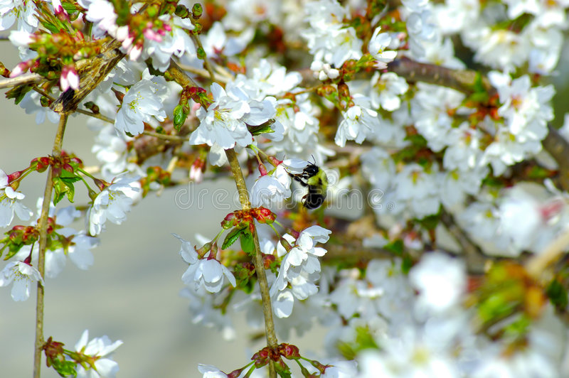 Download Spring Flowers stock image. Image of branch, tree, floral - 108735