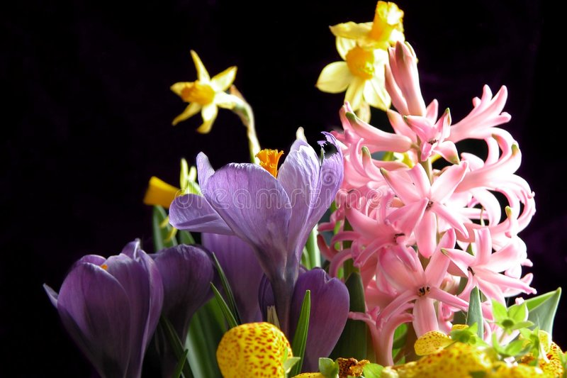 Download Spring Flowers stock image. Image of daffadil, colorfull - 12431
