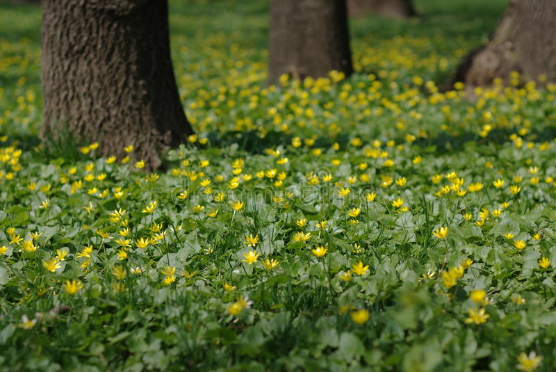 Download Spring flowers stock image. Image of woods, tree, spring - 13873079