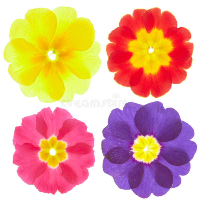 Free Spring Flowers Royalty Free Stock Photography - 18288187