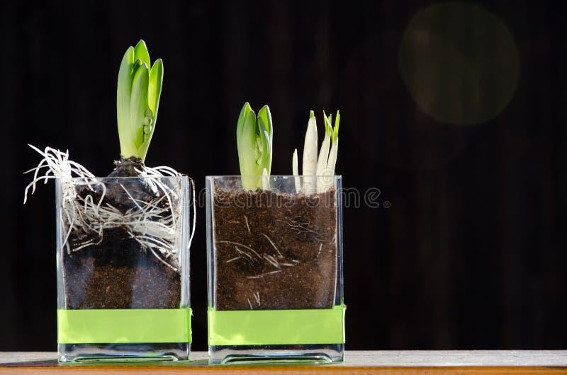 Download Spring Flowers stock photo. Image of gardening, green - 18659656