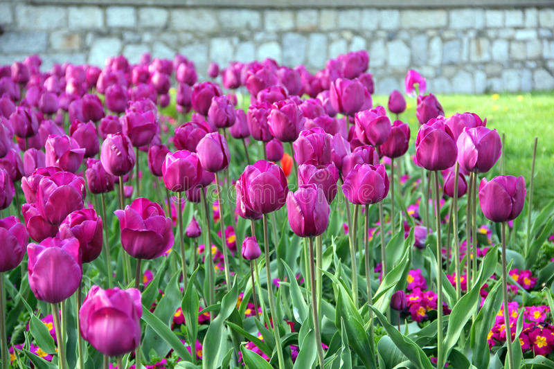 Download Spring Flowers stock photo. Image of smell, magenta, fresh - 19348634