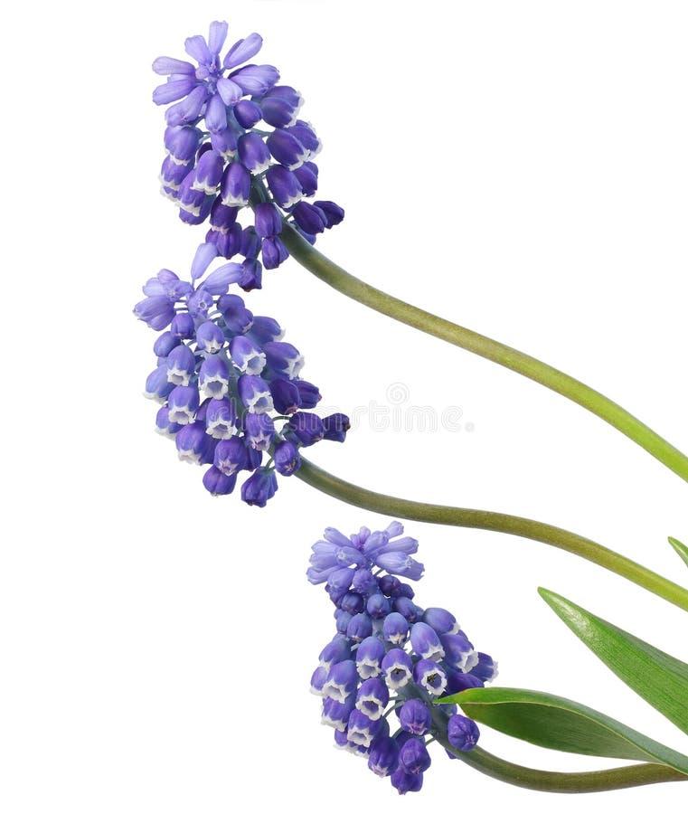 Download Spring flowers . stock image. Image of leaf, floral, elegance - 19418309