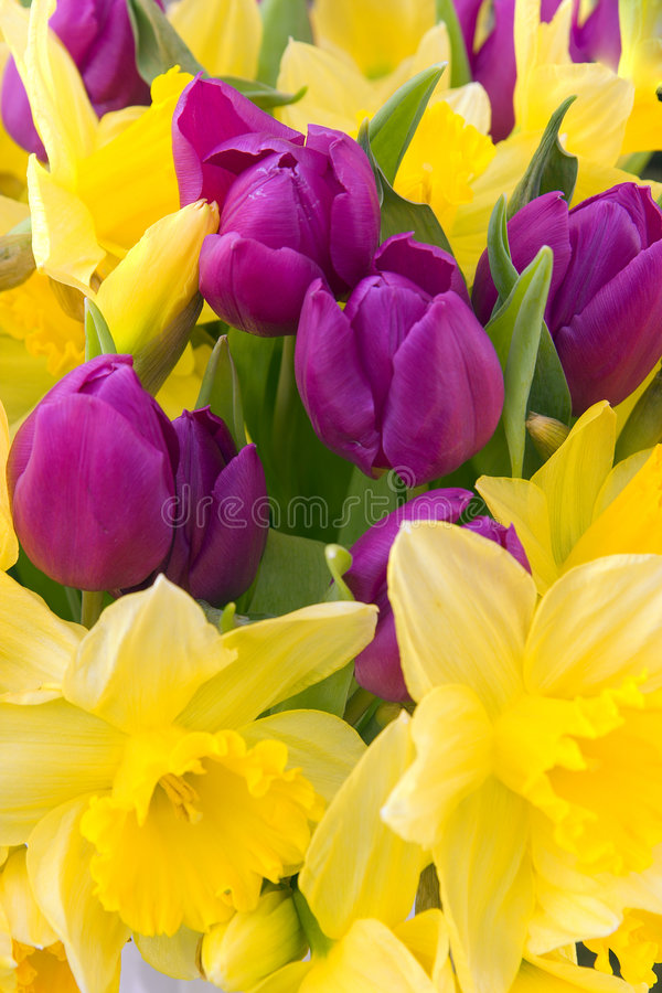 Spring flowers royalty free stock photography