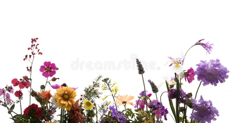 Download Spring Flowers stock photo. Image of orange, spring, bunch - 2327380