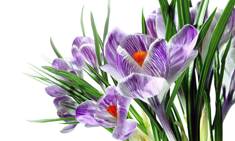 Download Spring flowers stock photo. Image of card, flora, petal - 23495352