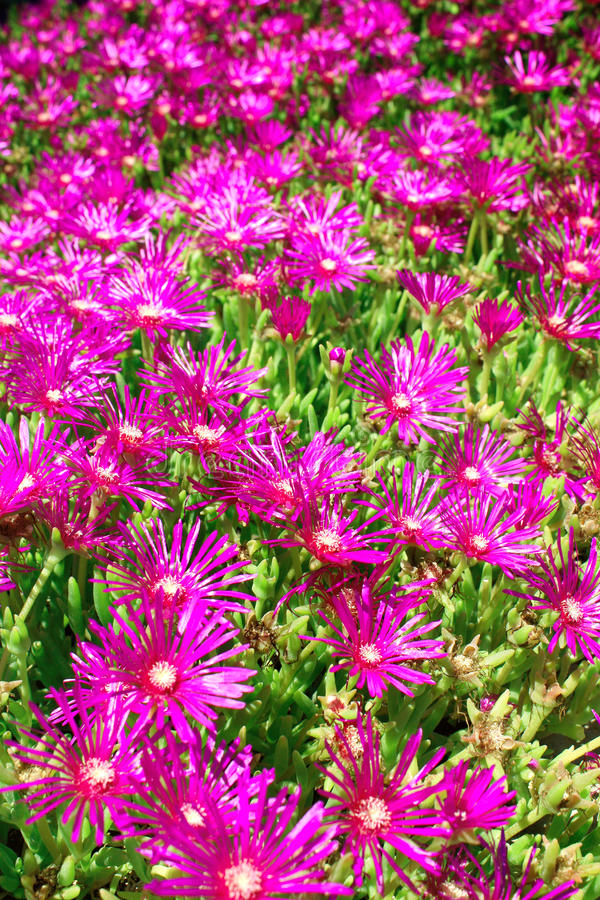 Download Spring Flowers Royalty Free Stock Image - Image: 28654426