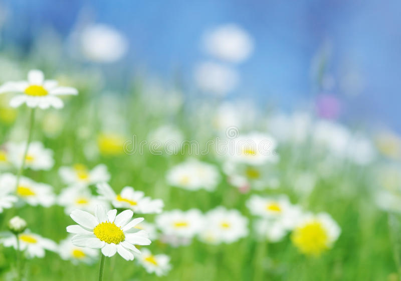 Spring flowers green background stock image