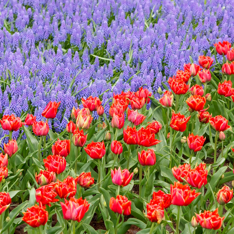 Download Spring flowers stock image. Image of colour, colorful - 38417973
