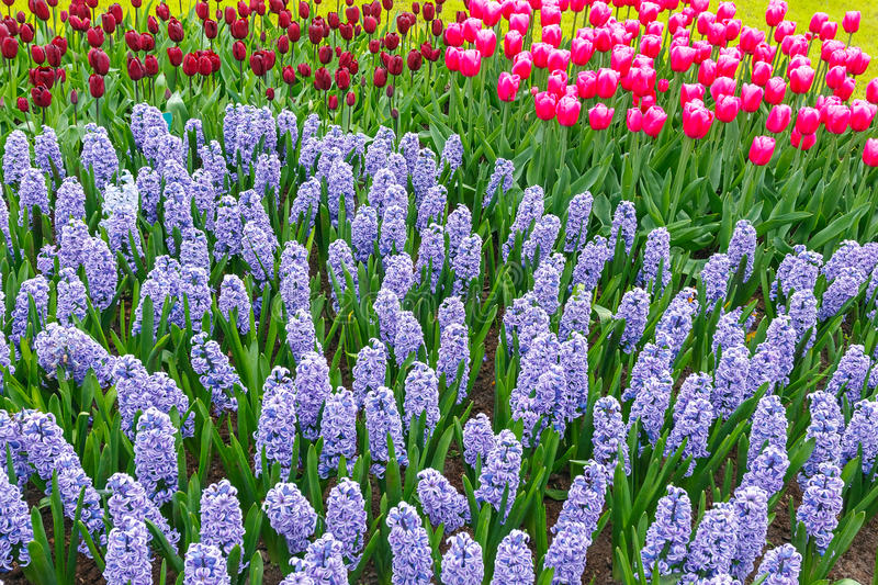 Download Spring flowers stock image. Image of green, flower, holland - 38418029