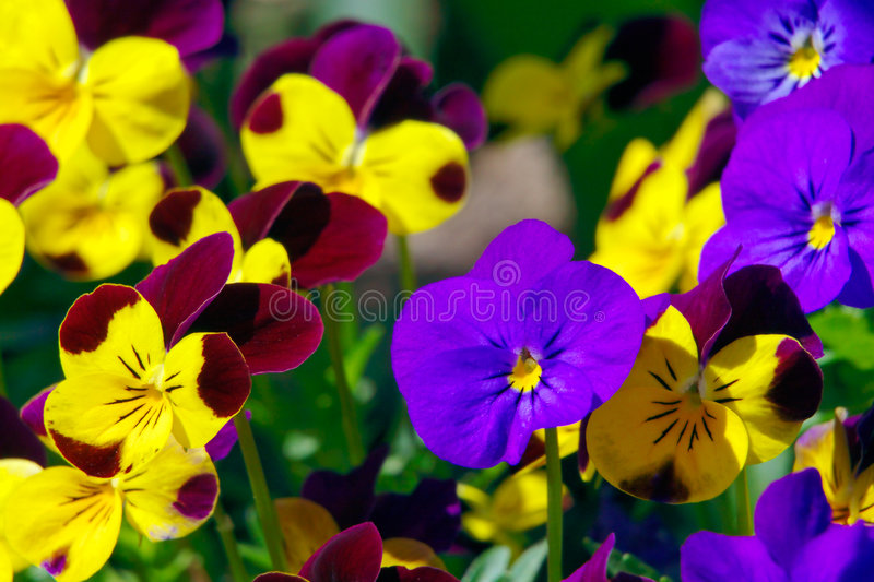 Download Spring flowers stock photo. Image of garden, close, growing - 593042