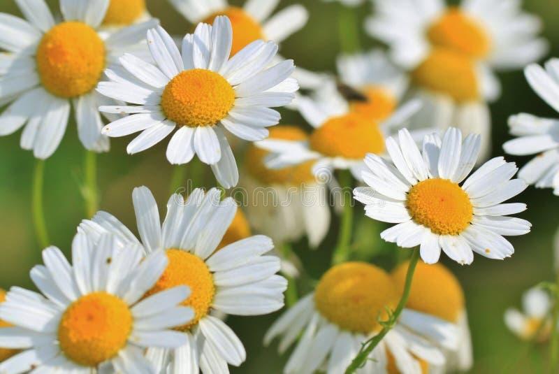 Spring Flowers Free Public Domain Cc0 Image